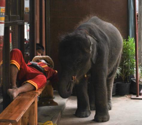Elephant at the ruins of Ayutthaya © Chanel 2014. BOHEMIAN LIFESTYLE